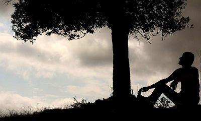 مستند درخت زندگی